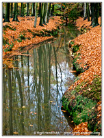 Nature: Autumn Reflections, Nov 2010