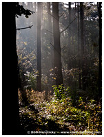 Nature: Hallebossen, Oct 2010